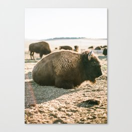 relaxing in the sun Canvas Print