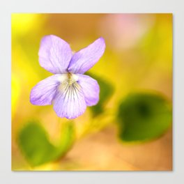 Wildflower Pansy Summer Blossom #decor #society6 #buyart Canvas Print