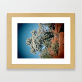 Twisted Tree Framed Art Print