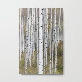 Colorado Forest Metal Print