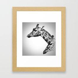 Giraffes Black And White Framed Art Print