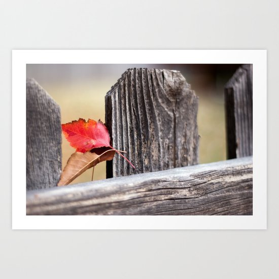 On the Fence Art Print