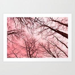 Naked trees tops, pink sky Art Print