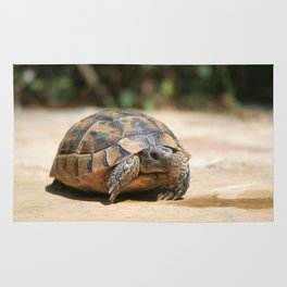 Young Tortoise Emerging From Its Shell Rug