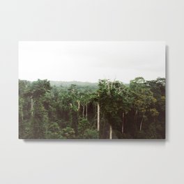 Rainforest Metal Print