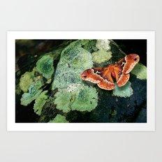 Moth on Rock Art Print