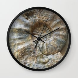 Curiosity #1 Ammonite Wall Clock