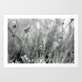 Lavender flowers in black and white Art Print