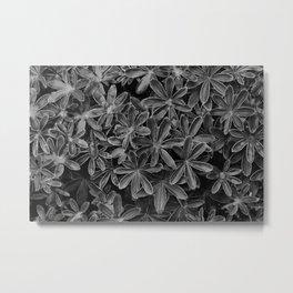Starry Organics Metal Print