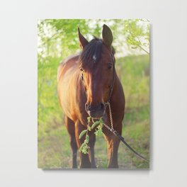 horse collection. spring Metal Print