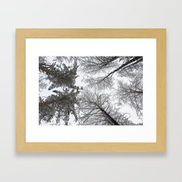 Forest trees in winter. View to the top. Framed Art Print