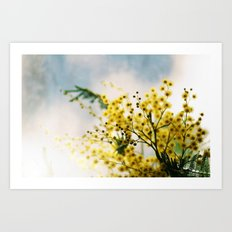Mimosa Art Print