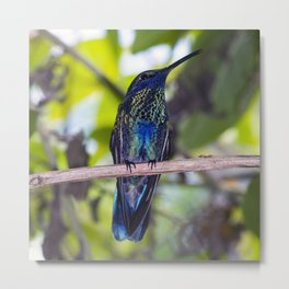 He Always Wanted to be a Peacock Metal Print