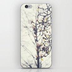 Magnolia Tree iPhone & iPod Skin