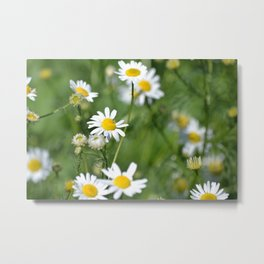 daisies in the breeze Metal Print