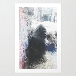 Grumpy Gorilla @ Buffalo Zoo in Buffalo, New York Art Print