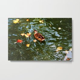 Duck in autumn Metal Print