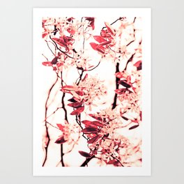 Spring Blossum Art Print