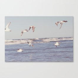 lullaby of birdland Canvas Print