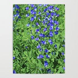 Blue False Indigo- vertical Poster