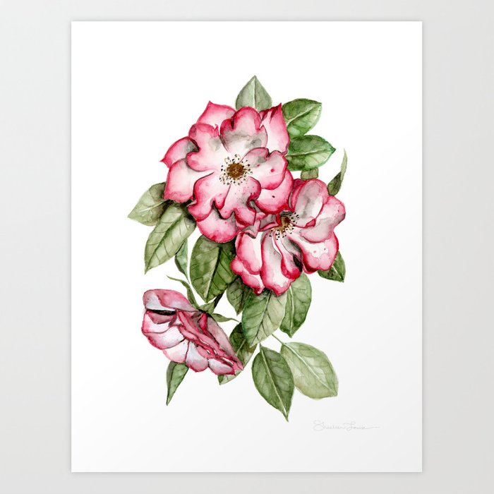 Blooming Pink Garden Roses Art Print By Shealeenlouise Society6