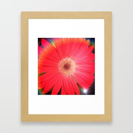 Rainbow Gerbera Framed Art Print