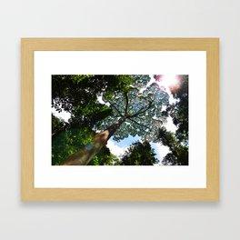 Borneo  Framed Art Print