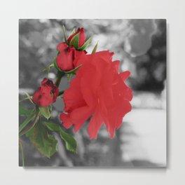 Roses, Color on B/W 1 Metal Print