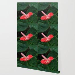 Anthurium Flower Wallpaper