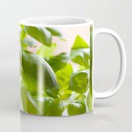 Ocimum basilicum green basil Coffee Mug