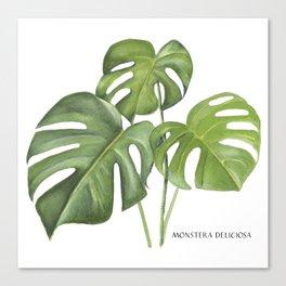 Monstera deliciosa 3 Leaves Canvas Print