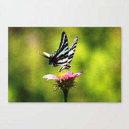 "Zebra Swallowtail ""Breakfast in the Garden"" Canvas Print"