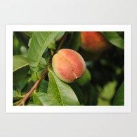 peach Art Prints featuring Peach by Holly Von Lanken Photography