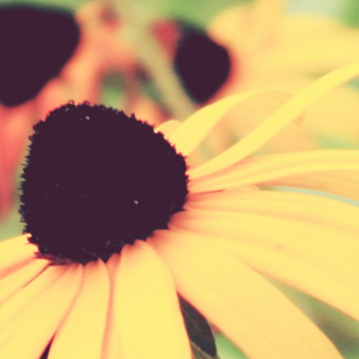 Rudbeckia - Cone Flower - JUSTART © Leggings