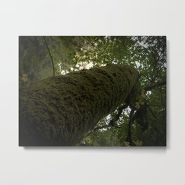 Moss on Tree-Muir Woods, California Metal Print