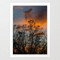 Desert Flora At Sunset - Bush  Art Print