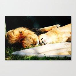Cat Nap (Jungle Love) Canvas Print