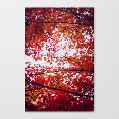 up in the trees you'll find peace Canvas Print