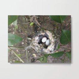 Hummingbird's Nest Metal Print