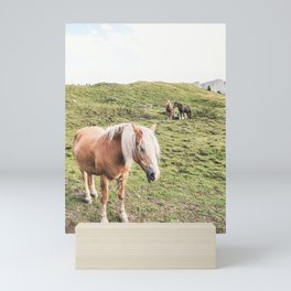 Dolomites III [ South Tyrol, Italy ] Horses Family in Moutain⎪Colorful travel photography Poster Mini Art Print