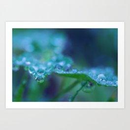 Morning Dew Drops Art Print