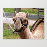 camel Canvas Prints featuring camel by Dantastic Photos