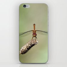 Autumn Meadowhawk Dragonfly iPhone & iPod Skin