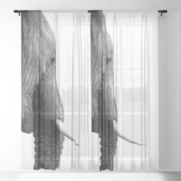 Black and white elephant portrait Sheer Curtain
