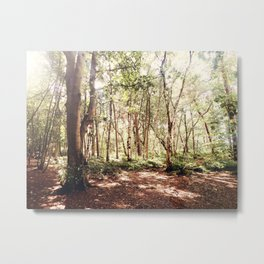 Forest Scape Metal Print