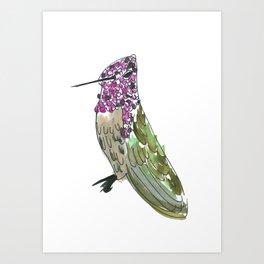 Hummingbird Cassius Art Print
