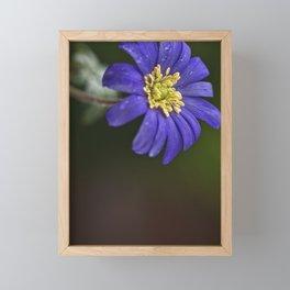 Anemone | purple flower | spring Framed Mini Art Print