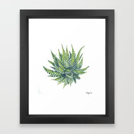 haworthia succulent Framed Art Print