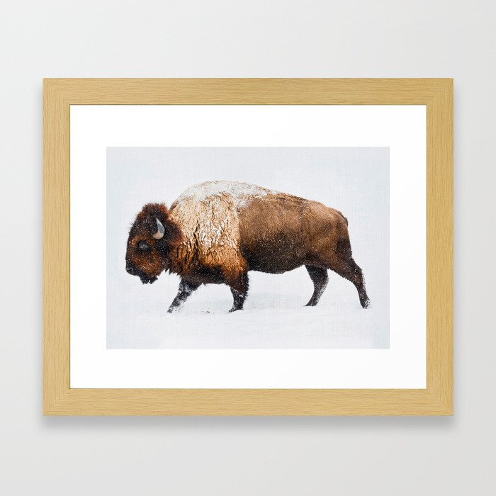 Buffalo In The Snow Framed Art Print