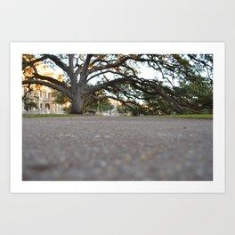 Century Tree, College Station, TX Art Print